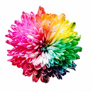 Visualisierung von bunter Blume